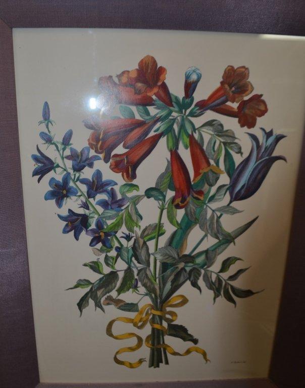 Pair of Botanical Engravings Nicholas Robert - 3