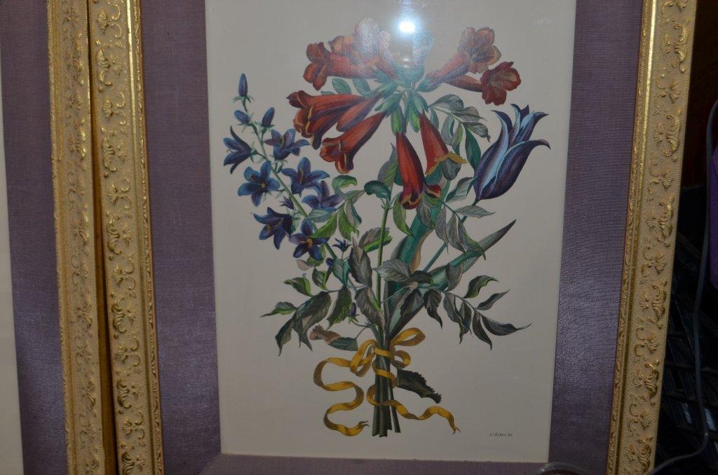 Pair of Botanical Engravings Nicholas Robert - 4