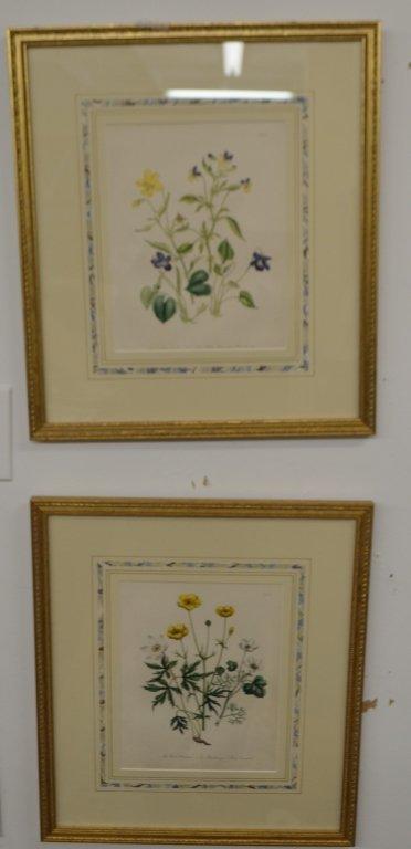 Pair of Floral Engravings