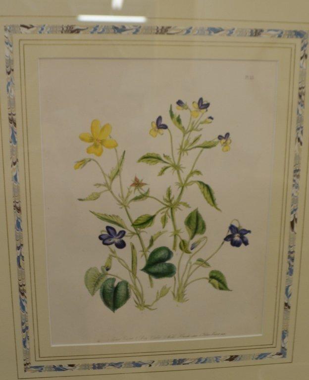 Pair of Floral Engravings - 2
