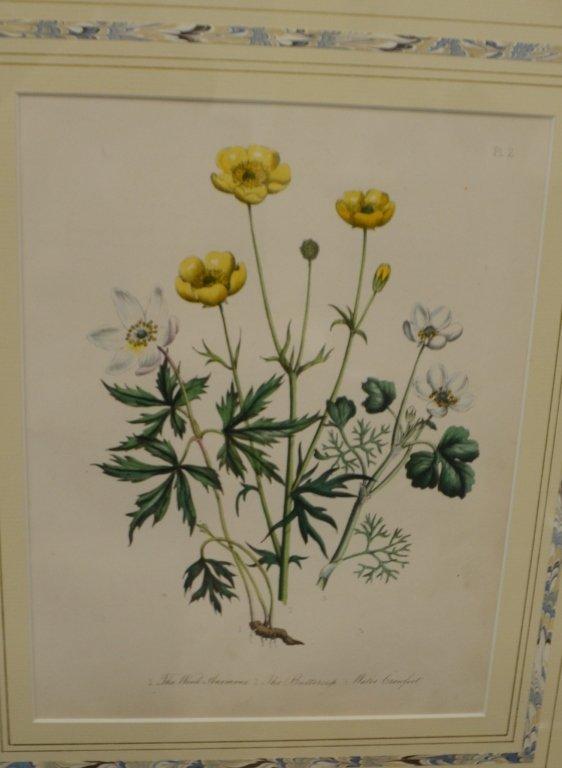 Pair of Floral Engravings - 3