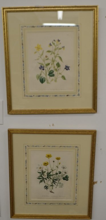 Pair of Floral Engravings - 4