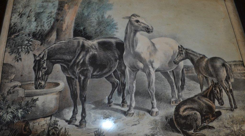 19th Century Engraving Spring - 3