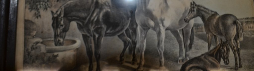 19th Century Engraving Spring - 4