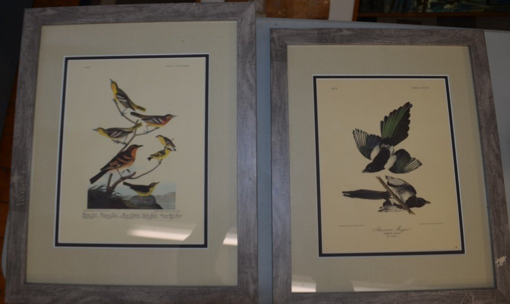 Pair of Audobon Prints