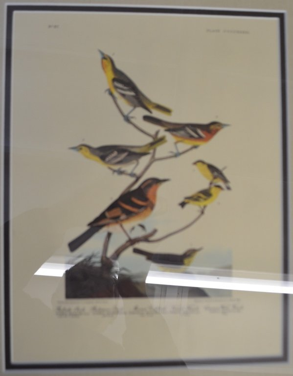 Pair of Audobon Prints - 2