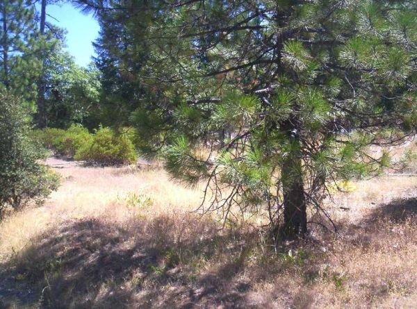 8. TRINITY PINES (TRINITY CO., CA) 1.38 acres.