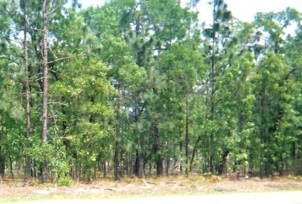 24. KEYSTONE HEIGHTS AREA (CLAY CO., FL) 18,687 square