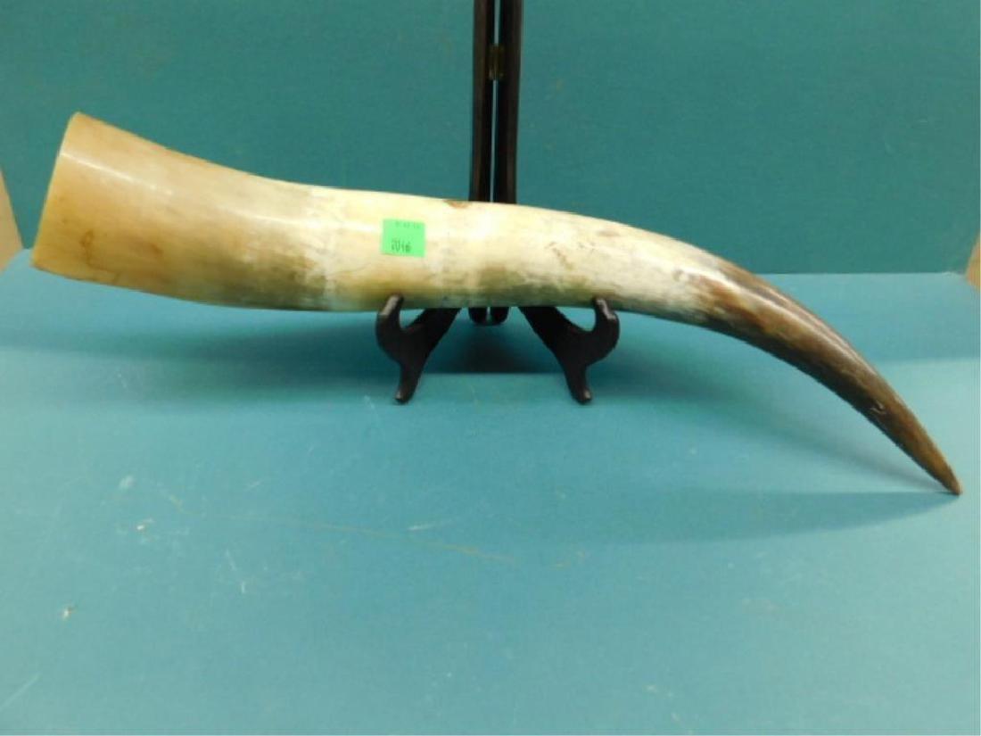 Scrimshaw Long Horn Steer Horn