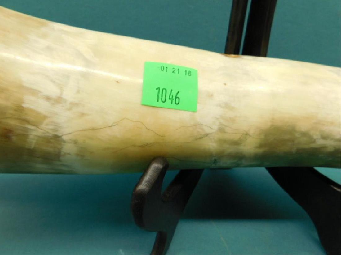 Scrimshaw Long Horn Steer Horn - 5