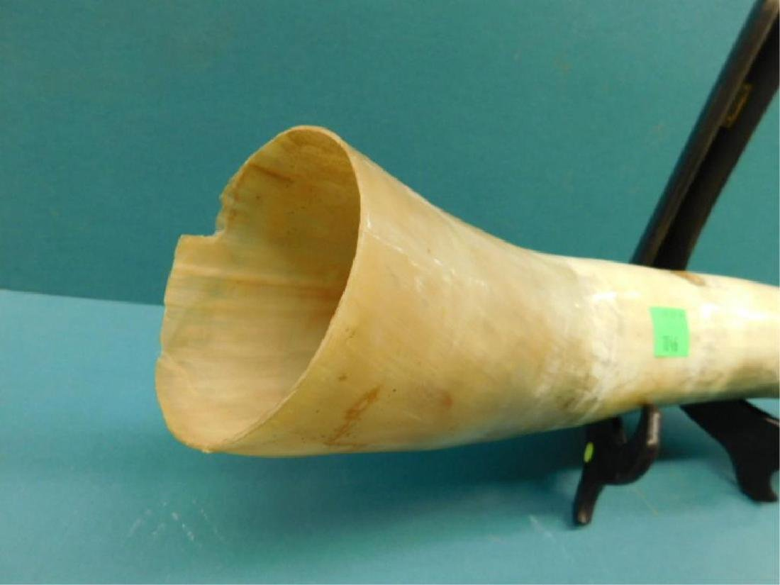 Scrimshaw Long Horn Steer Horn - 6