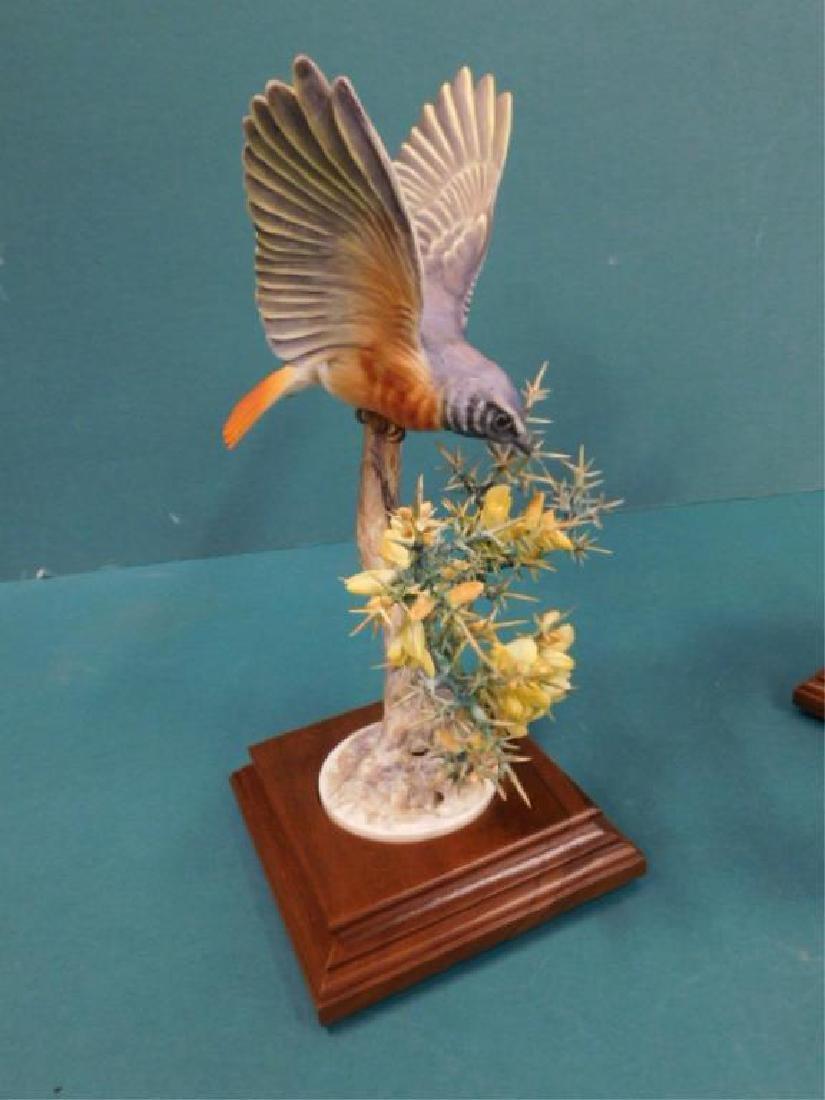 Pr Royal Worcester Redstart Ruticilla - 5