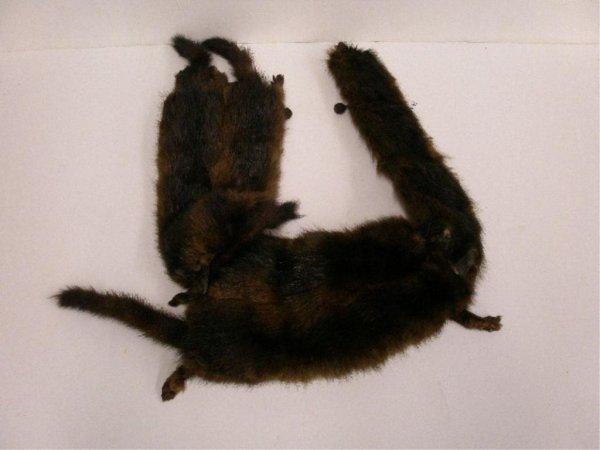 1123: Brown fur scarf