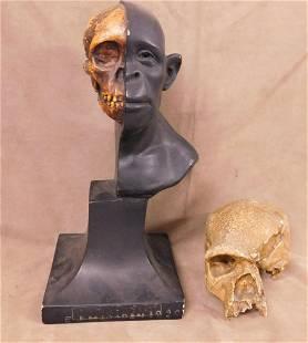 2 Skull Sculptures