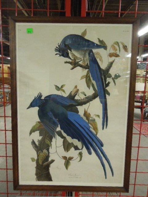 [after J.J. Audubon] Havell, Columbia Jay