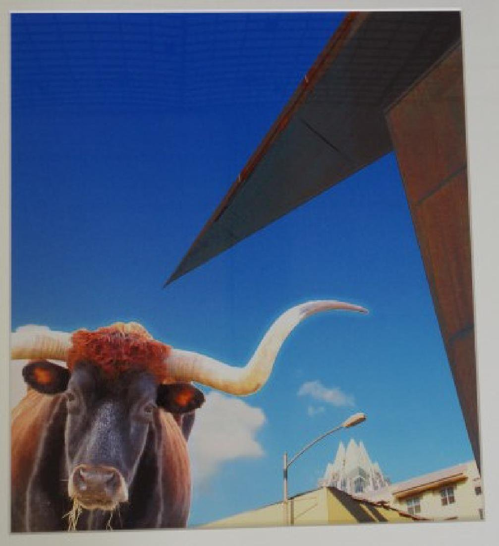 Modern Photograph - Longhorn & Blue Sky