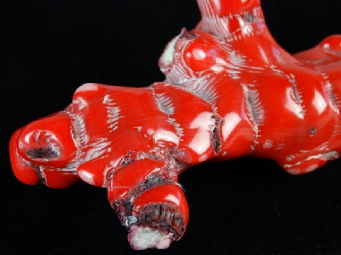 Red Coral Specimen - 4