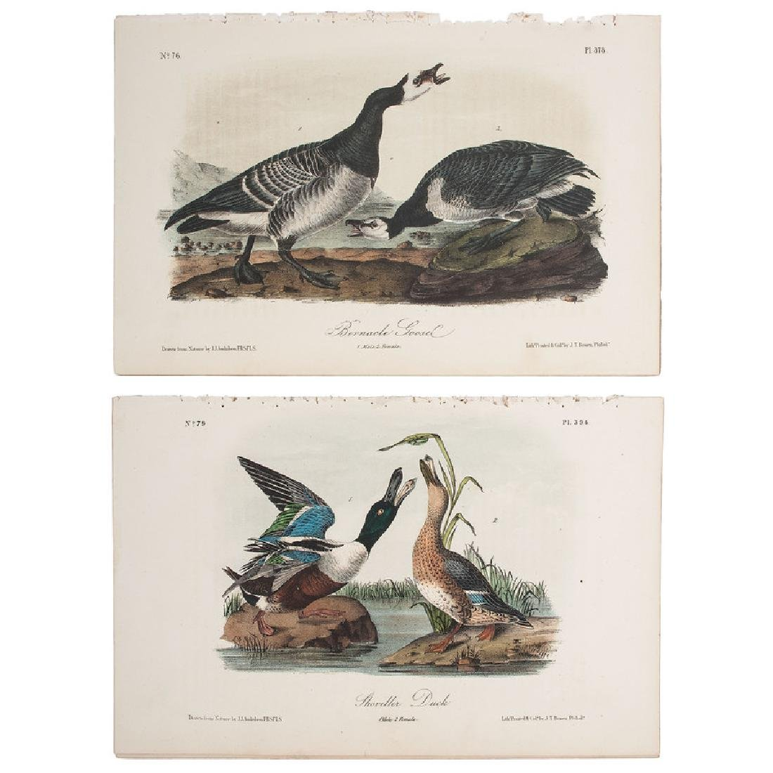 Audubon Birds of America Hand-Colored Lithographs,