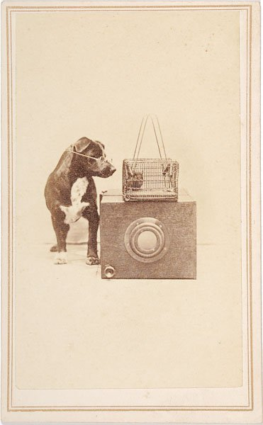 544: CDV of a Dog With a Camera,