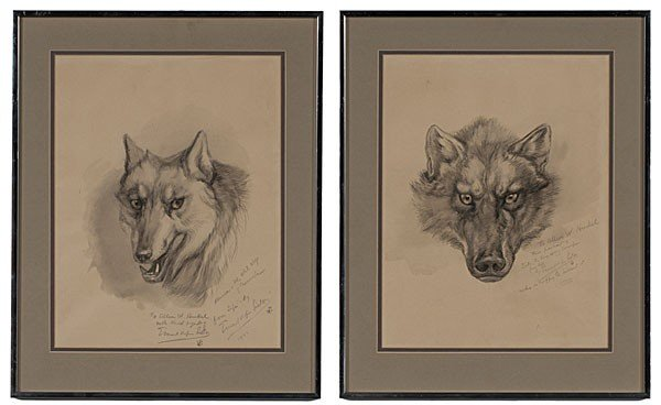 13: Illustrations from Lobo by Ernest T. Seton, Graphit