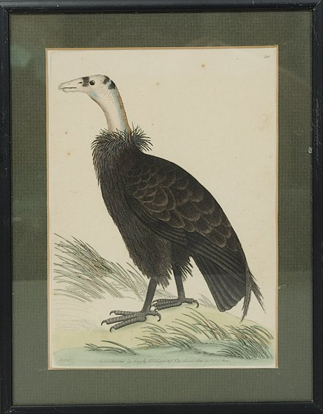 21: Early Ornithological Hand-Colored Prints by F. P. N