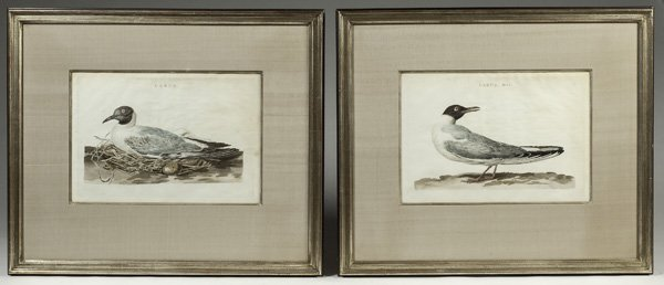 Pair of Hand Colored Bird Engravings by Cornelius