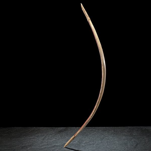 Rare Blackfoot Sinew-Backed Elk Horn Bow From the - 2