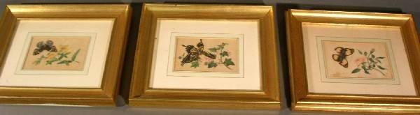 "27: Twelve butterfly prints in gilt frames. 6""x4"" ea."