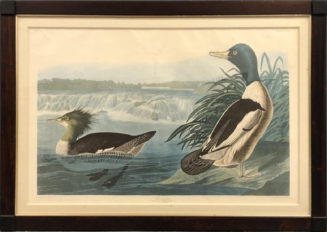 "Elephant Folio ""Goosander"" after J.J. Audubon"