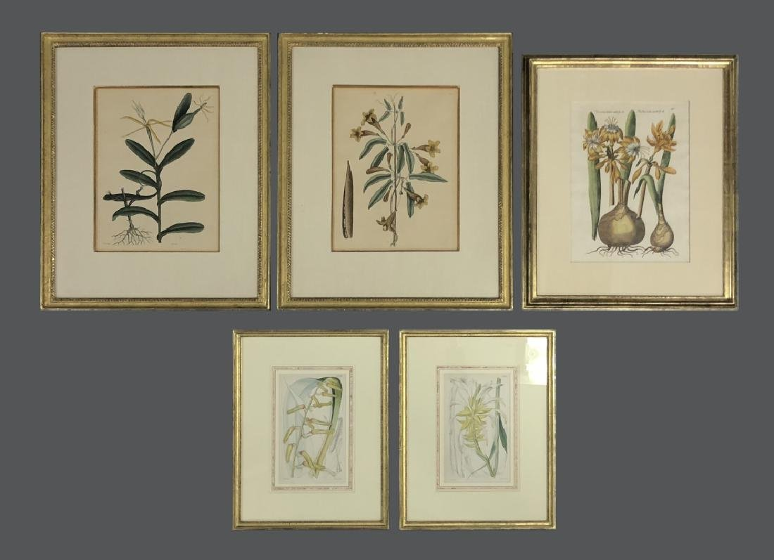 Five Early Botanical Prints