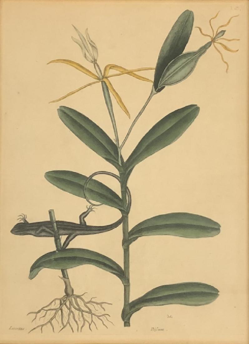 Five Early Botanical Prints - 2