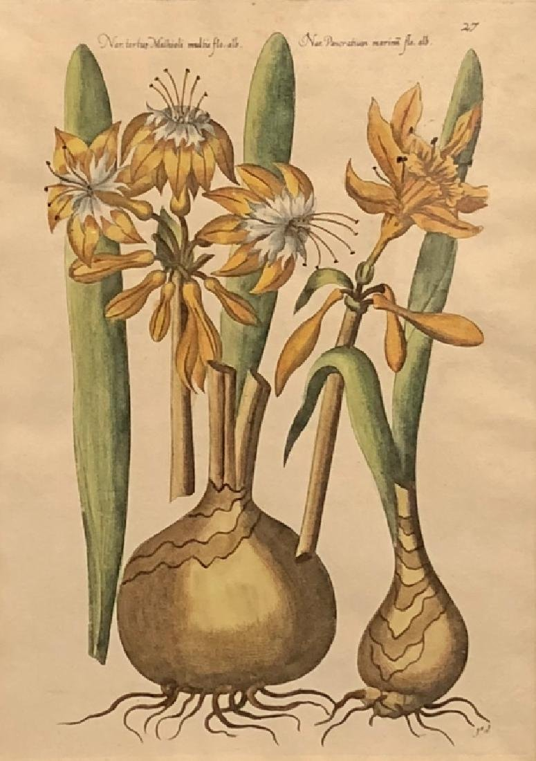 Five Early Botanical Prints - 4