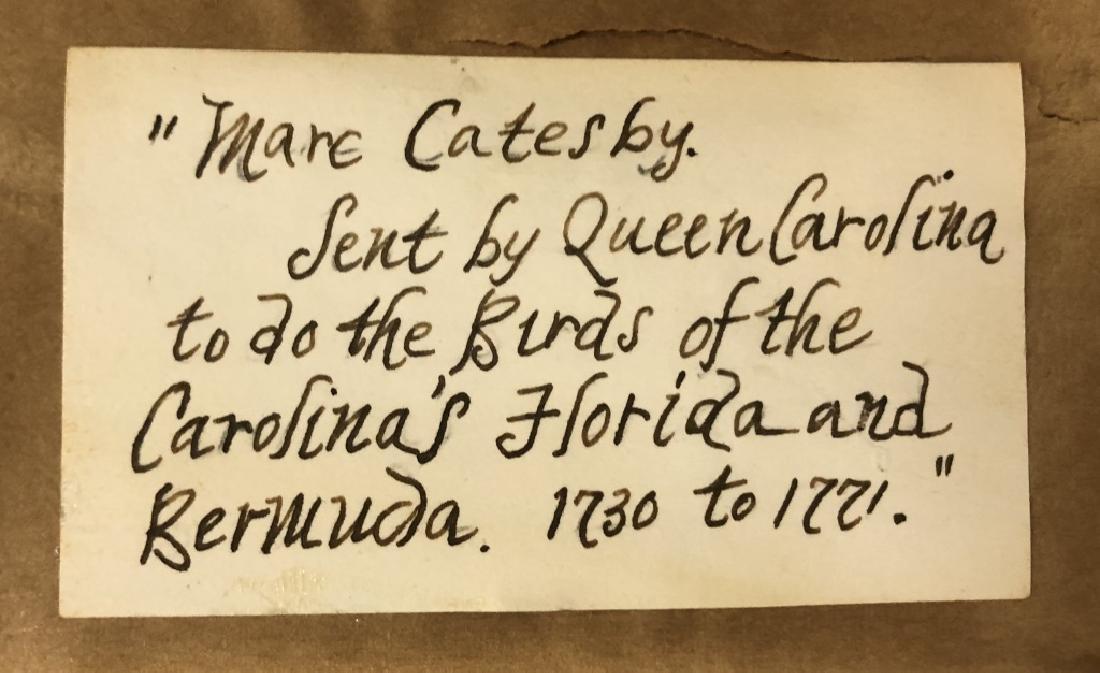 Five Early Botanical Prints - 5