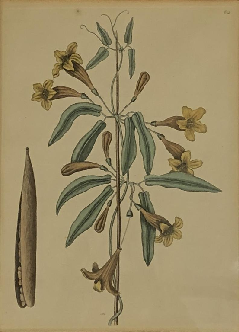 Five Early Botanical Prints - 6