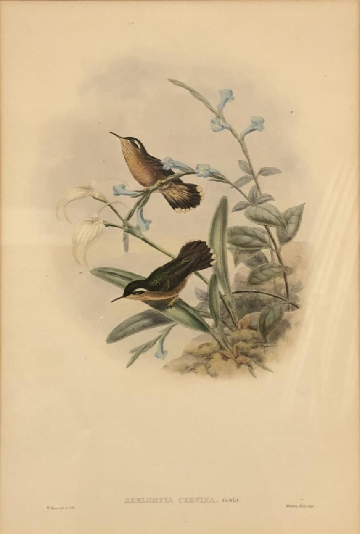 Three Bird Lithographs - 10