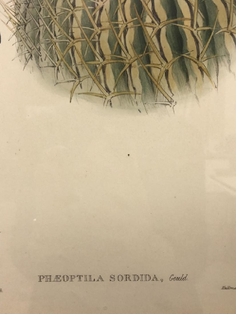 Three Bird Lithographs - 7