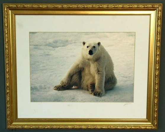 28: Framed photograph of a polar bear by Joel Simon Men