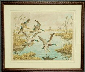 11: Framed and matted print of mallard ducks signed l.