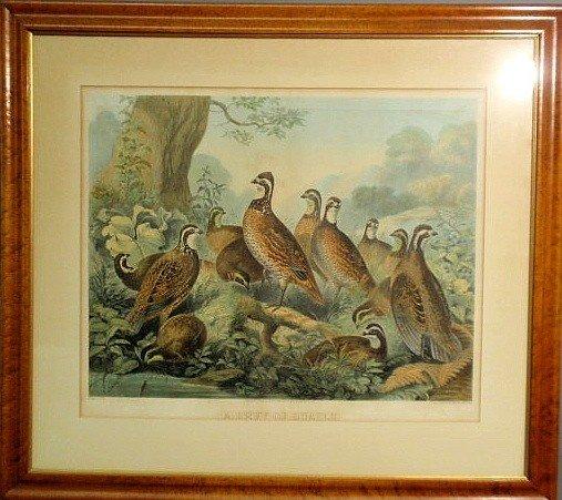 "354: Maple framed lithograph ""A Bevy of Quails"", Saron"