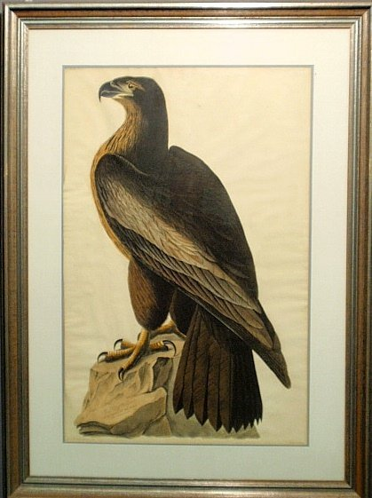Rare Audubon elephant folio with the J. Whatman Turkey