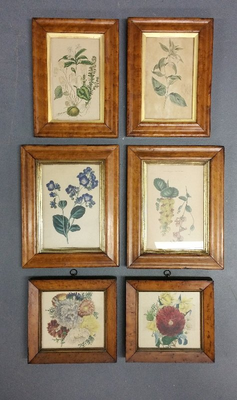 "Six maple framed botanical prints. Largest pair 8"" 5"