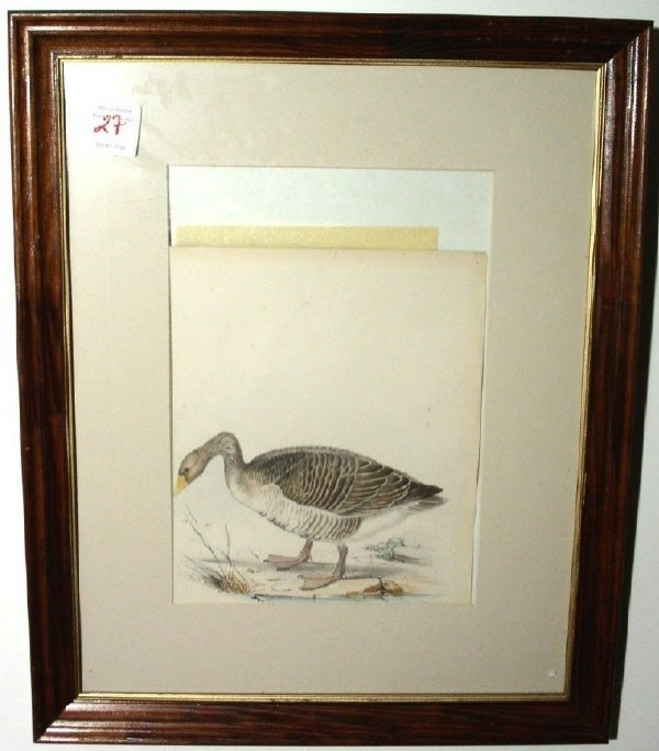 27: Three framed bird prints.