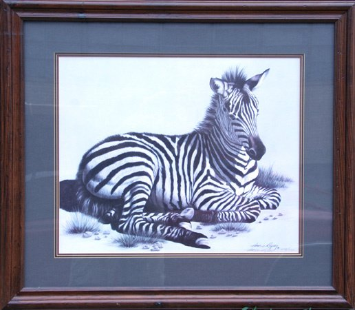 13: Harold Rigsby Framed Wildlife Print, Zebra