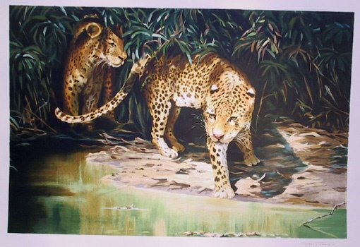 13: Sydney Taylor, Signed Lithograph, 2 Leopards