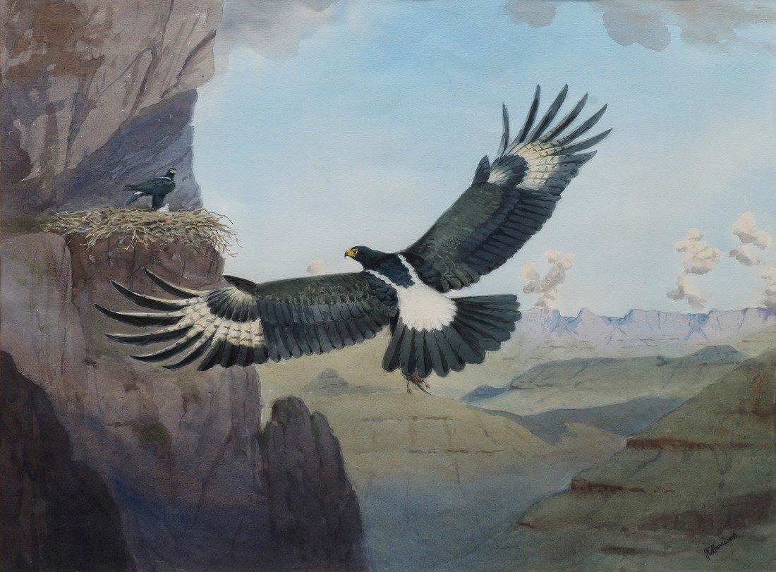 John Cyril Harrison, British 1898-1985- Bateleur eagles;