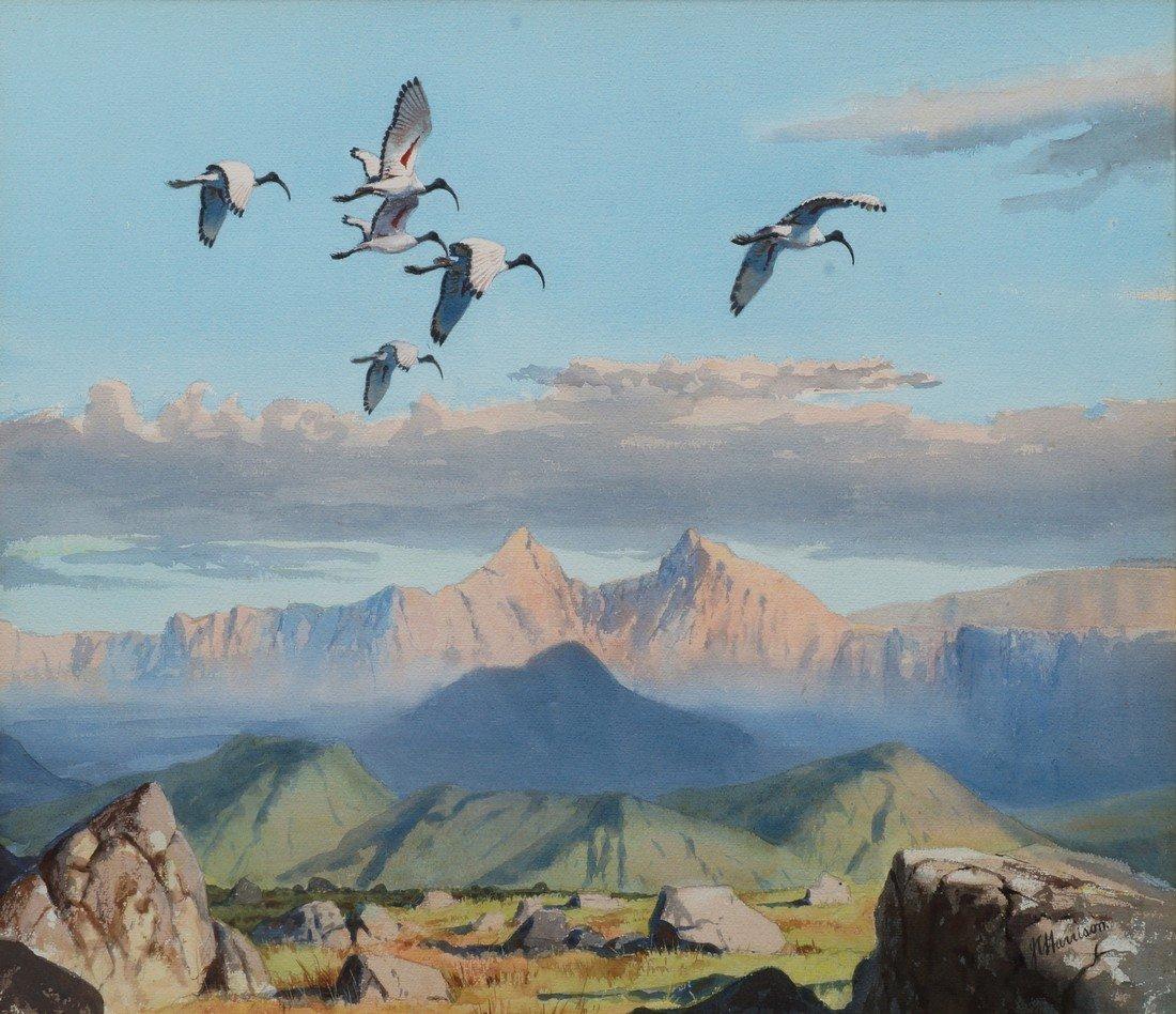 John Cyril Harrison, British 1898-1985- Sacred Ibis