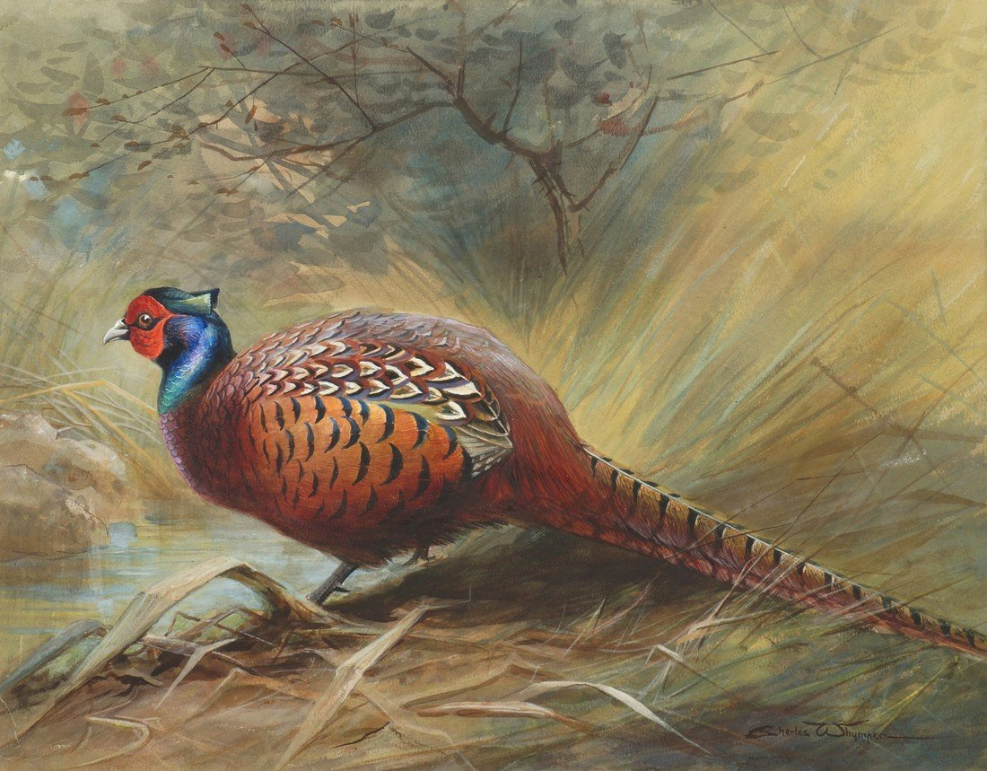 Charles Whymper, British 1853-1941- Pheasant in