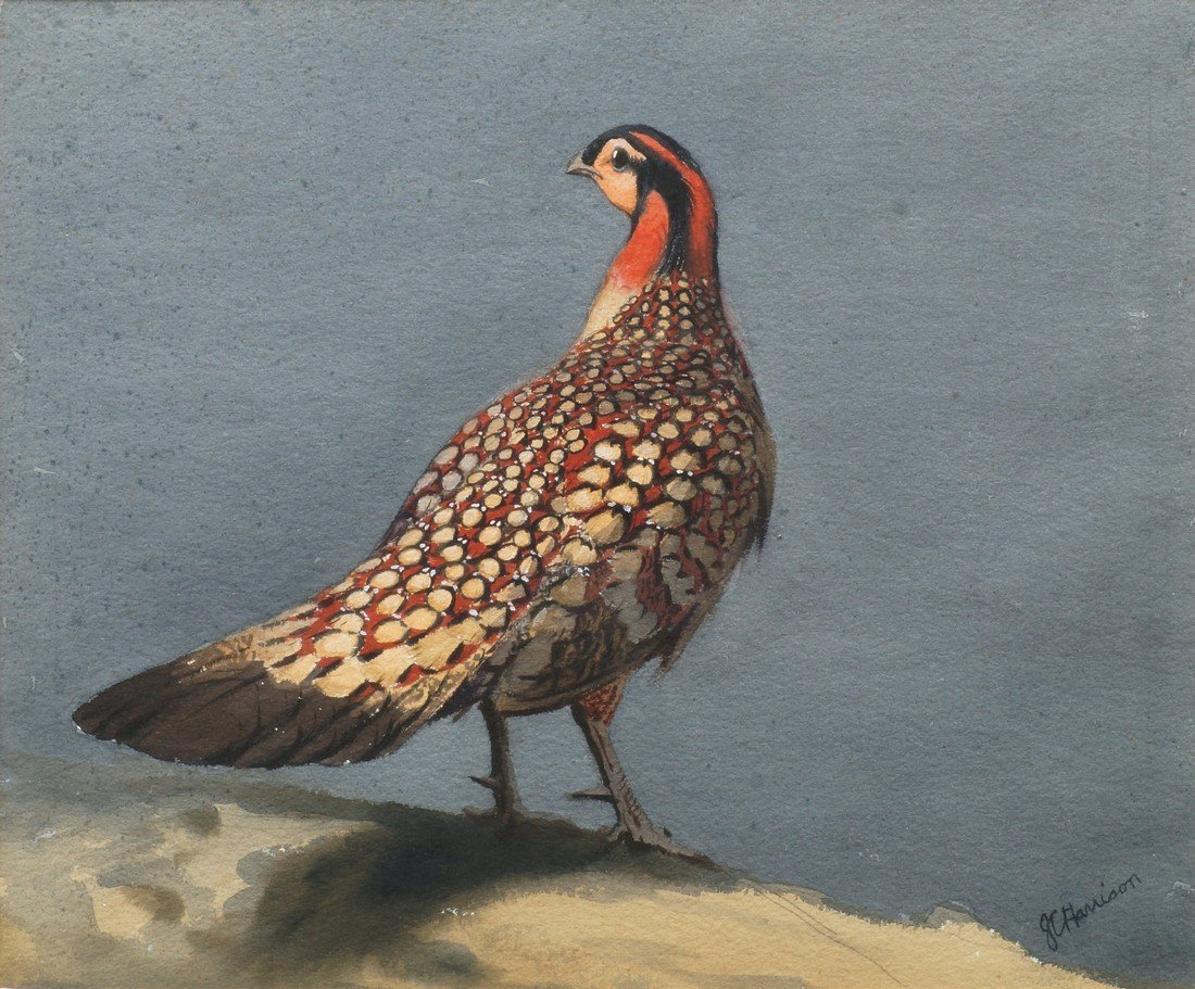 John Cyril Harrison, British 1898-1985- ''Cabot's