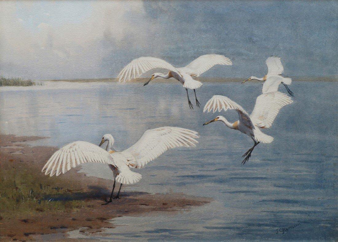 John Cyril Harrison, British 1898-1985- ''Spoonbills
