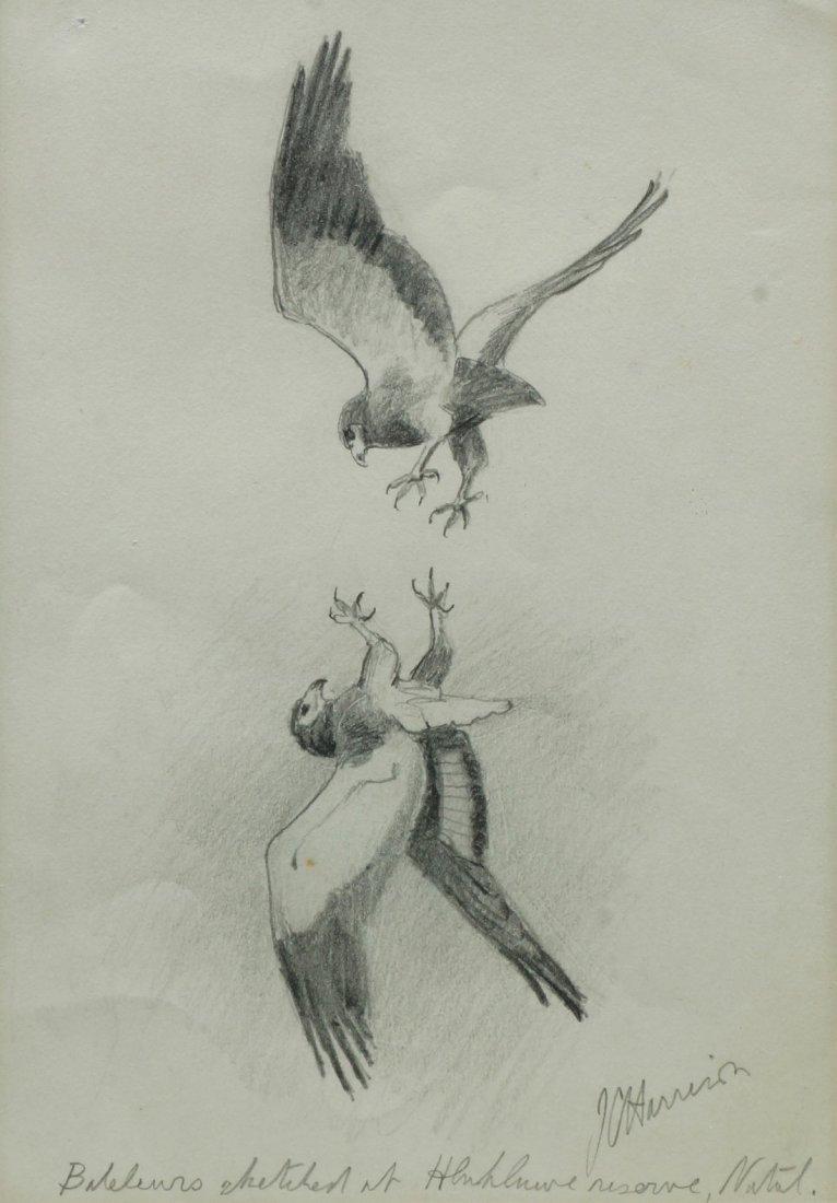 John Cyril Harrison, British 1898-1985- ''Bateleurs at